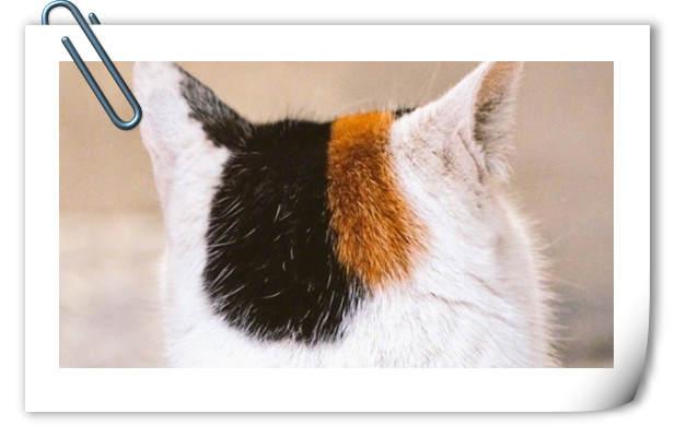 次元壁突破!三次元中的猫咪老师?