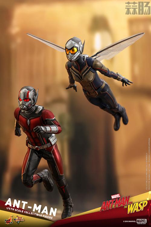 Hottoys推出《蚁人2:黄蜂女现身》蚁人及黄蜂女1:6比例珍藏人偶 模玩 第1张