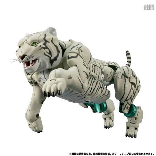 Takara Tomy变形金刚MP-50白虎勇士新产品图 野兽形态优秀 变形金刚 第3张