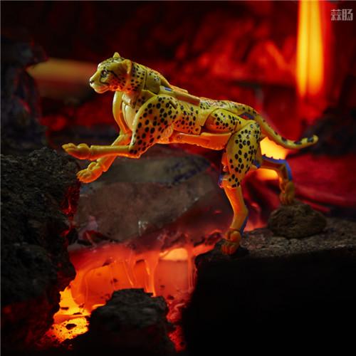 孩之宝公开变形金刚Kingdom王国老鼠、黄豹、狂飙、霸王龙威震实物图 变形金刚 第4张